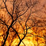 katja-richter-winterhimmel