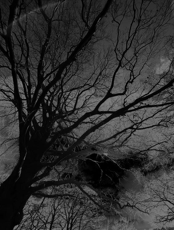 katja-richter-baum-schwarz-weiss-solarisation