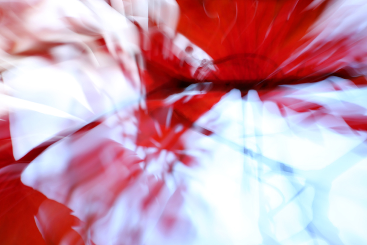 Katja Richter . . . ART BOX NATURE